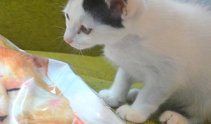 LOVE & Co.のTシャツと猫